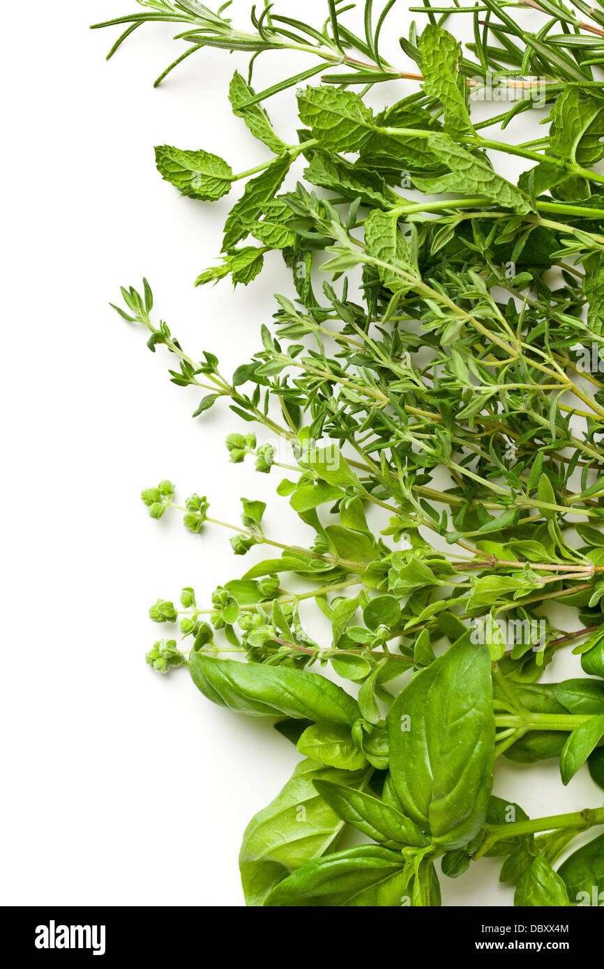various herbs on white background - Stock Image