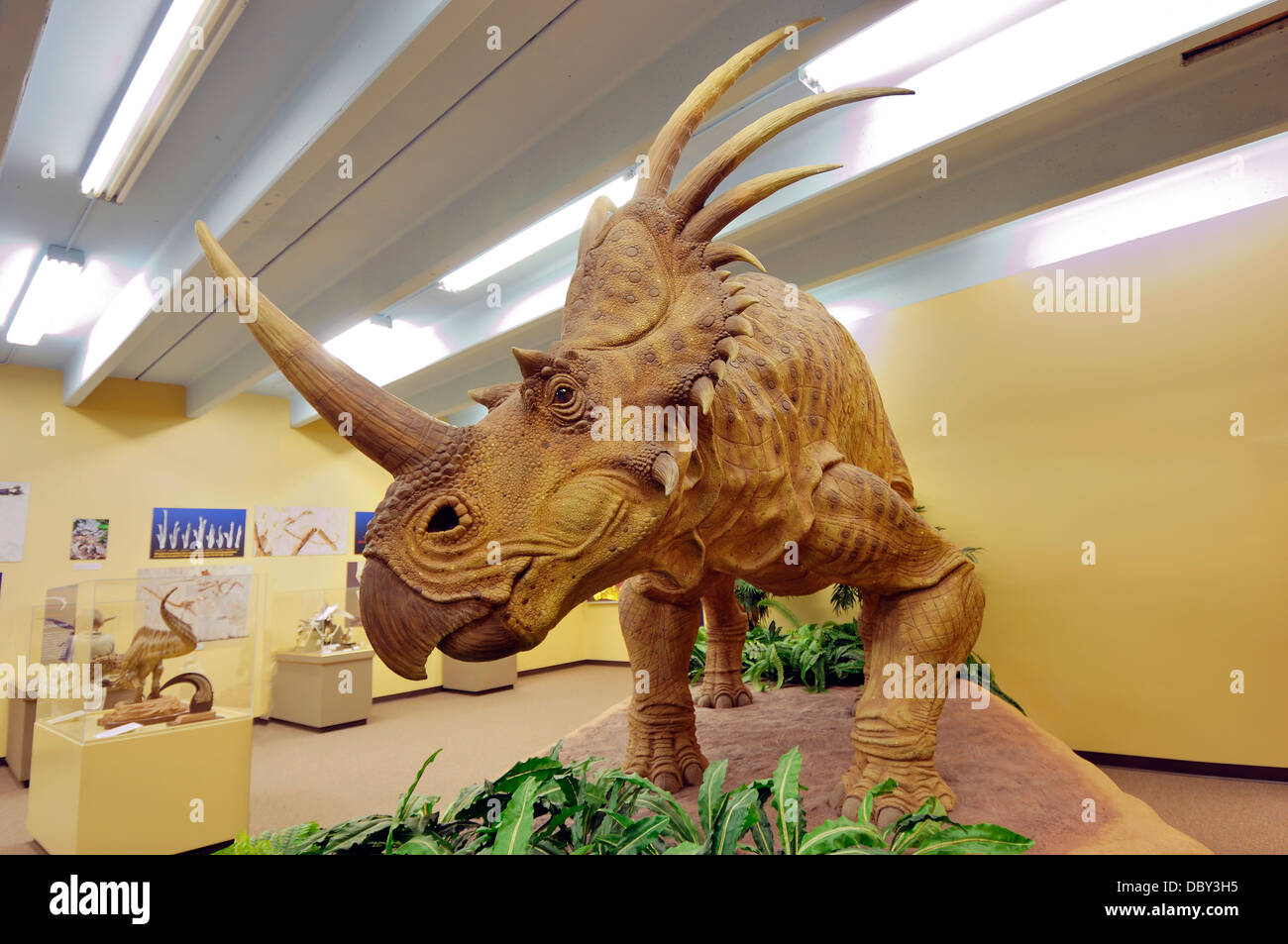 Styracosaurus  meaning 'spiked lizard'  was a genus of herbivorous ceratopsian dinosaur from the Cretaceous - Stock Image