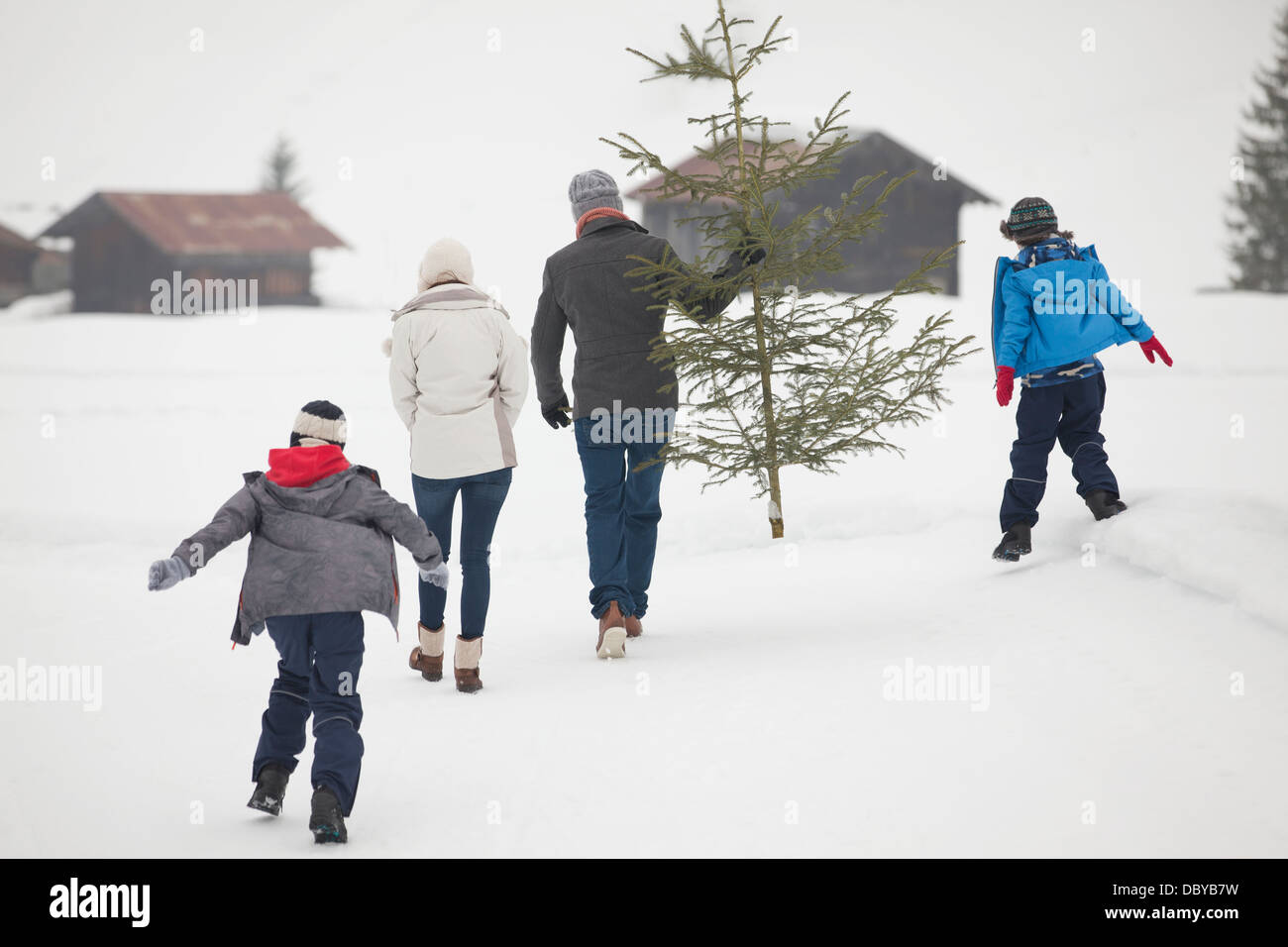 Family carrying fresh Christmas tree in snowy field - Stock Image