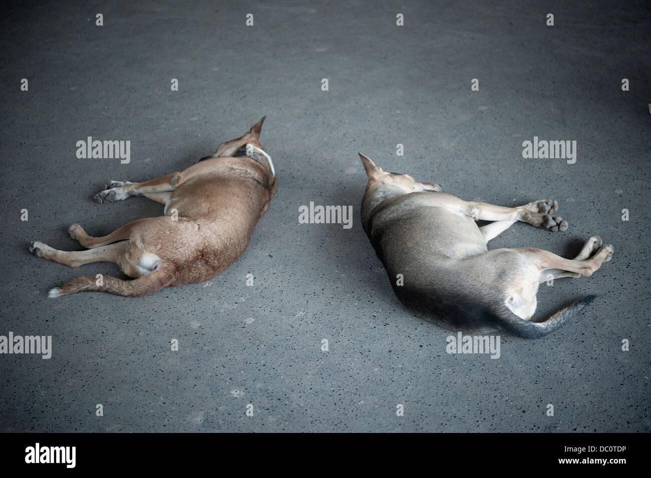 Stray dogs sleeping on concrete blocks in a Railway station, Mumbai, India - Stock Image