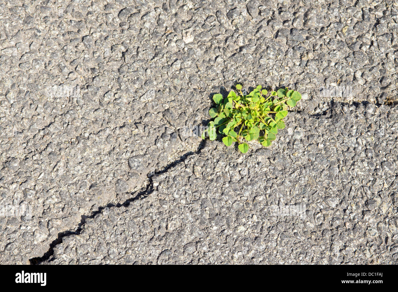 Green grass on fracture of grey asphalt. Concept of new life and overcome difficulties and problems. - Stock Image