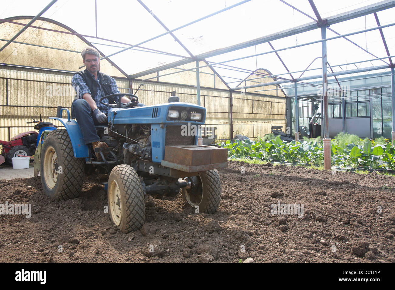 Organic farmer on tractor maintaining soil in polytunnel - Stock Image