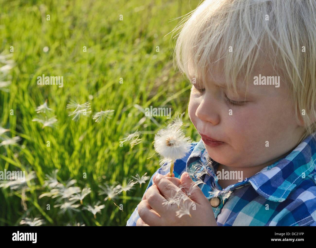 Boy blowing dandelion clock, close up - Stock Image