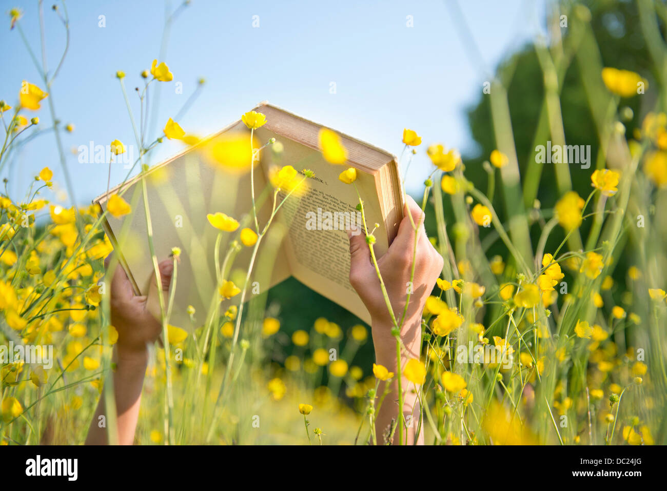 Cropped shot of boy's hands holding book in long grass - Stock Image
