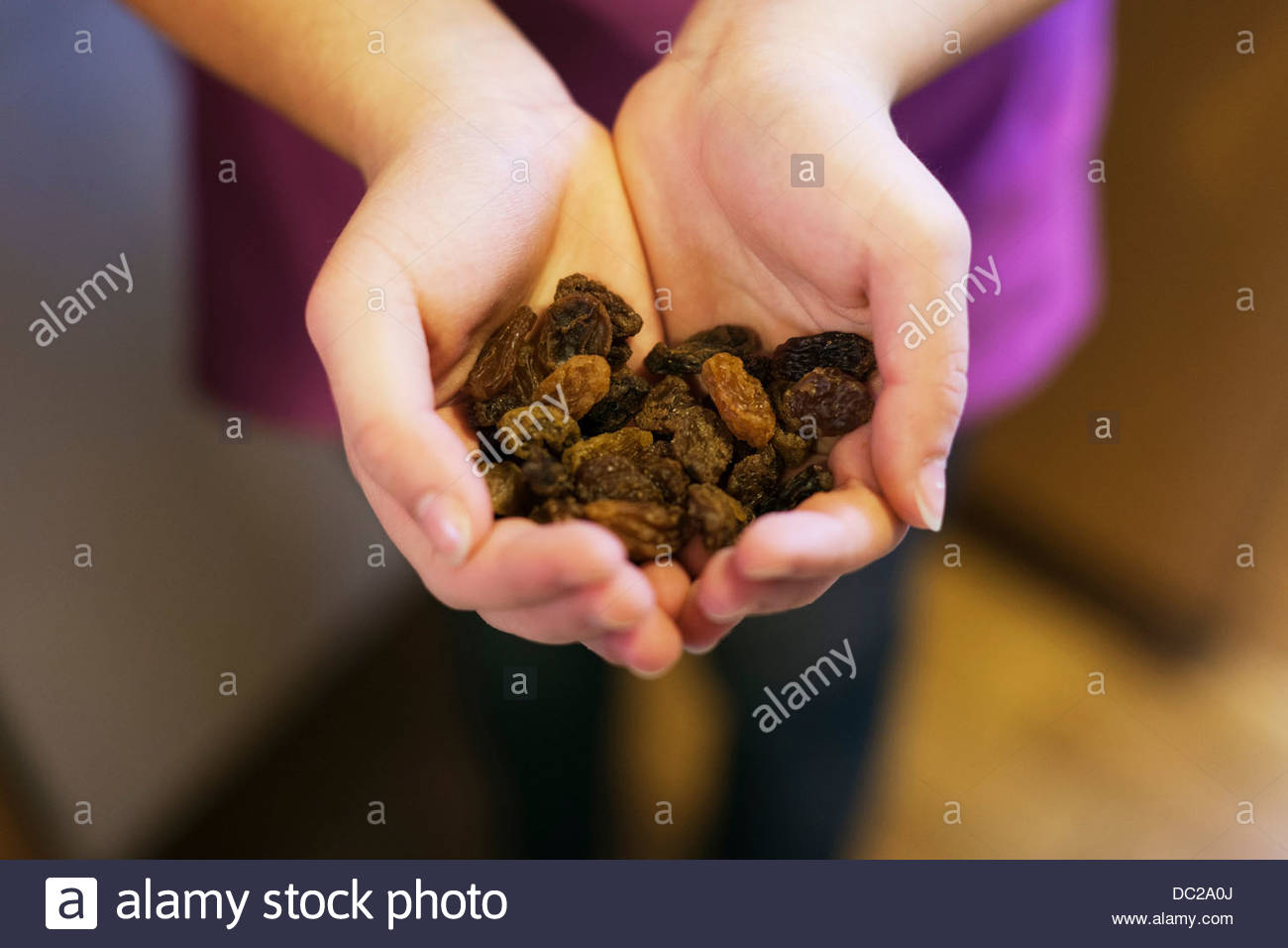Cupped hands holding raisins, close-up - Stock Image