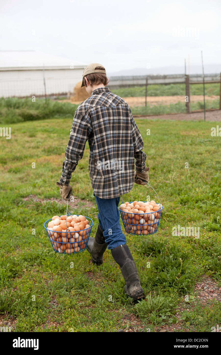 Boy carrying two baskets of eggs - Stock Image