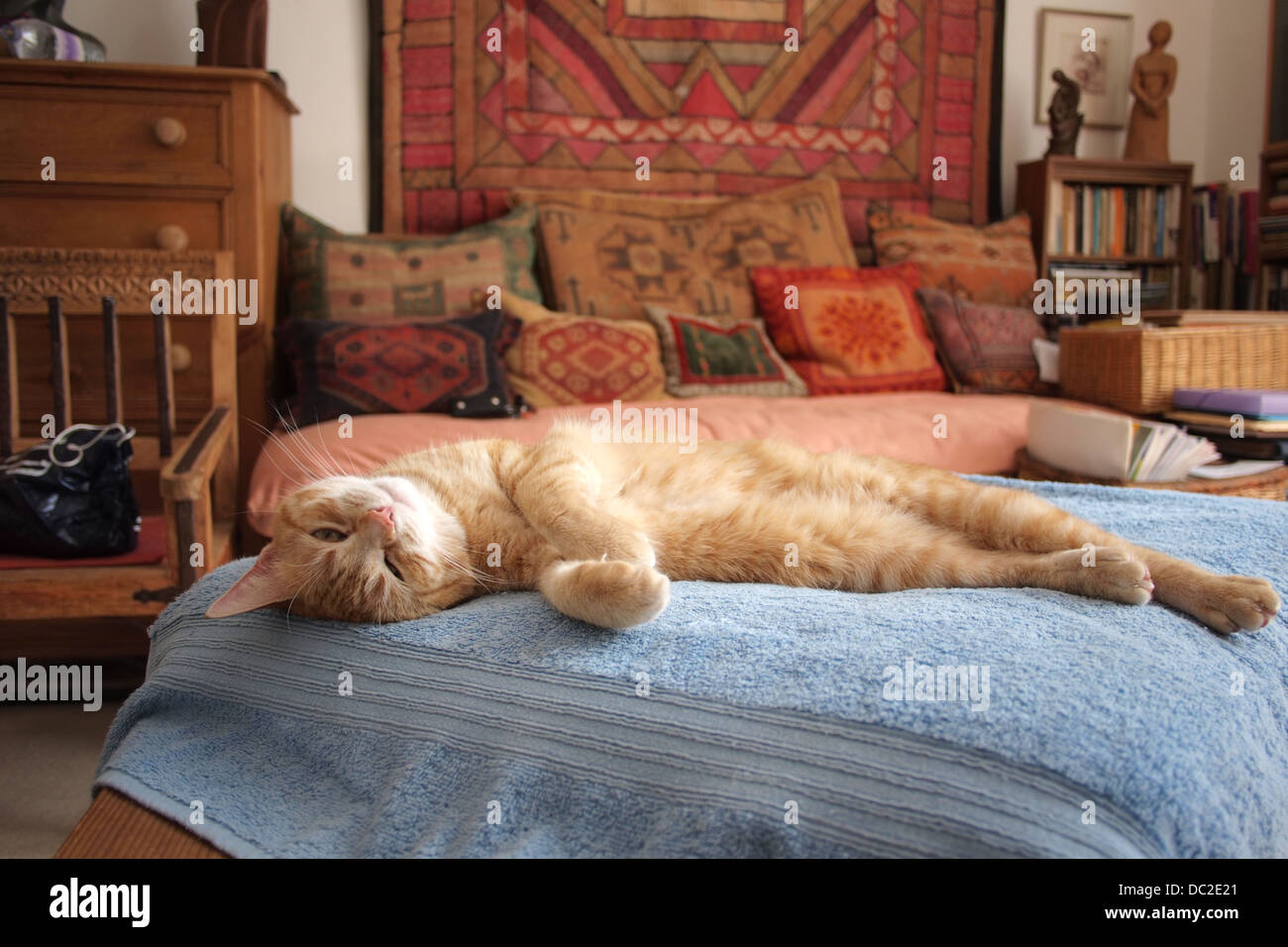Comfy luxurious ginger house cat sleeping Stock Photo