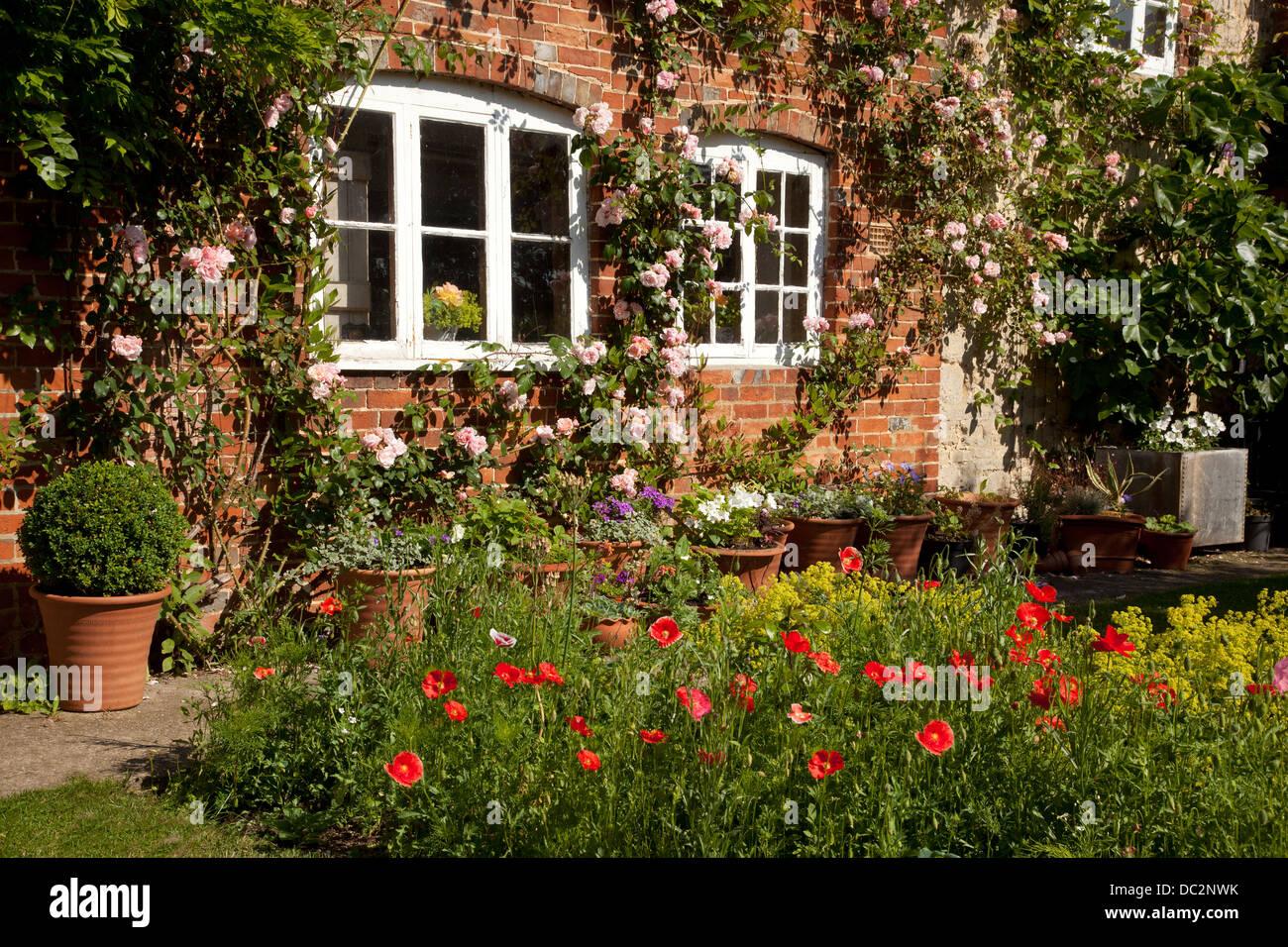 Cottage Garden Roses Stock Photos & Cottage Garden Roses Stock ...