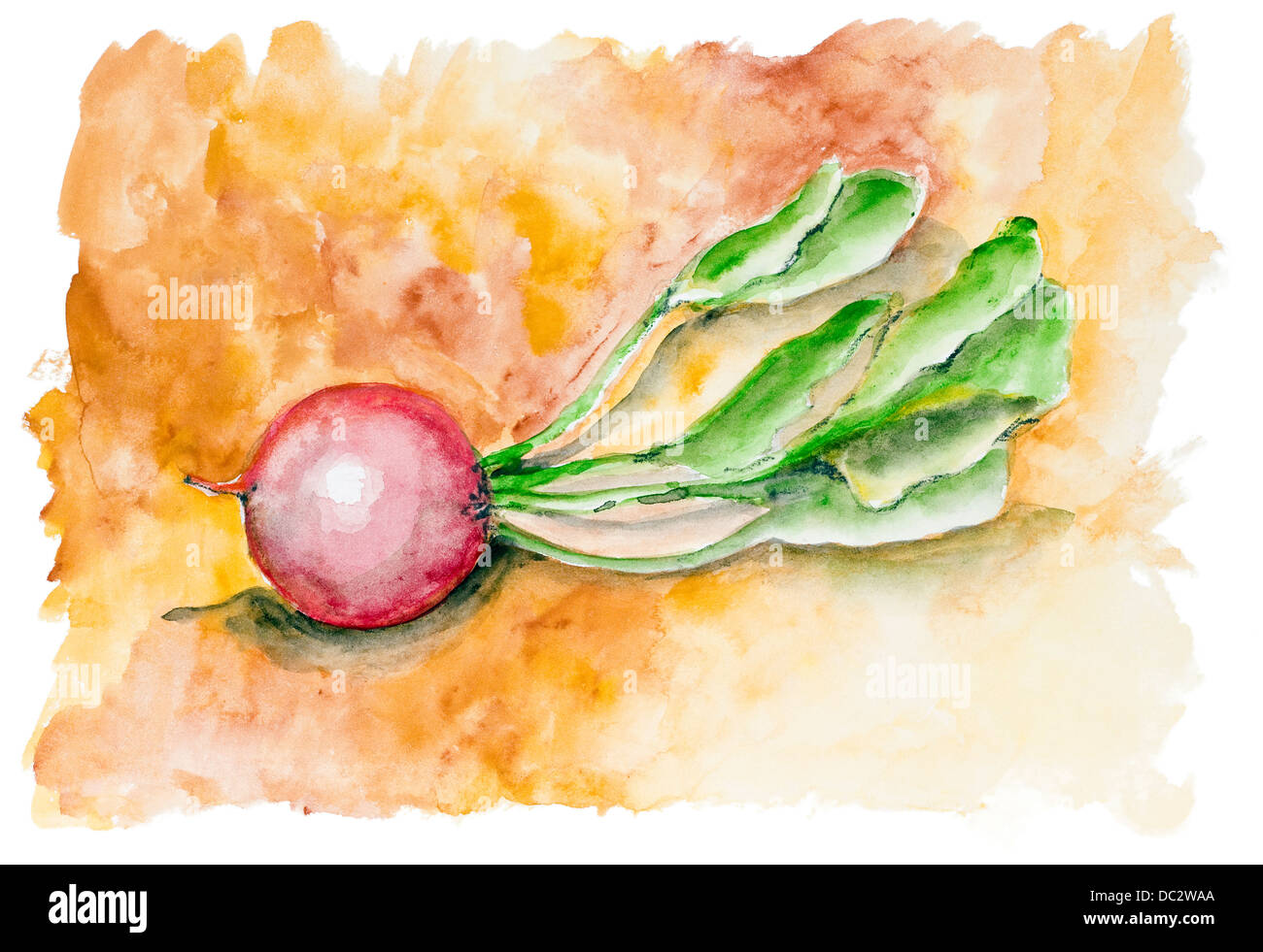 Red beet root on fire isolated. Handmade watercolor painting illustration on a white paper art background - Stock Image