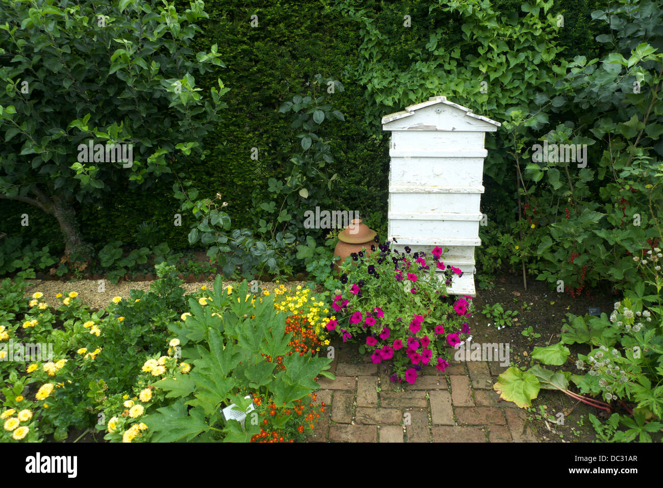 A corner of an organic kitchen cottage garden, UK. - Stock Image
