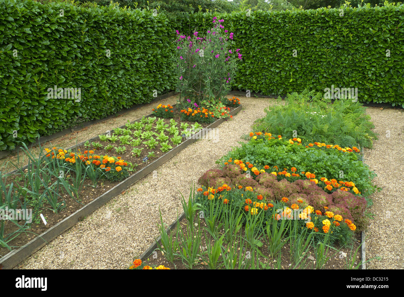 Raised Bed Plots Kitchen Garden With Companion Plants To Deter