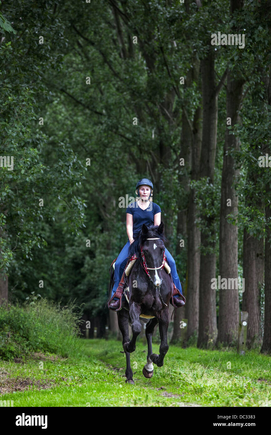Horsewoman riding horse in gallop through lane in forest - Stock Image