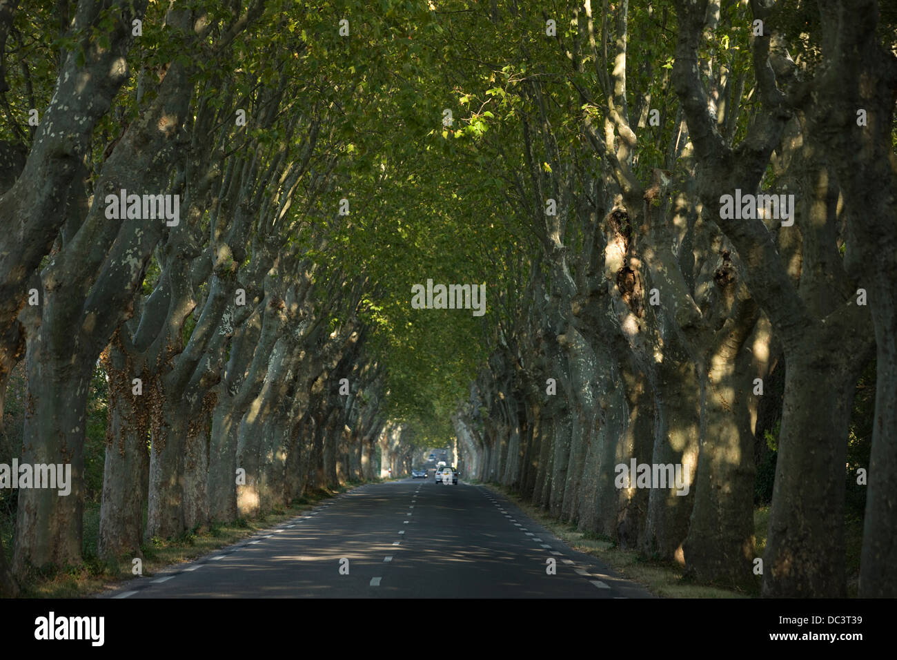 ROUTE D99 SYCAMORE TREE LINED ROAD SAINT REMY PROVENCE FRANCE Stock Photo