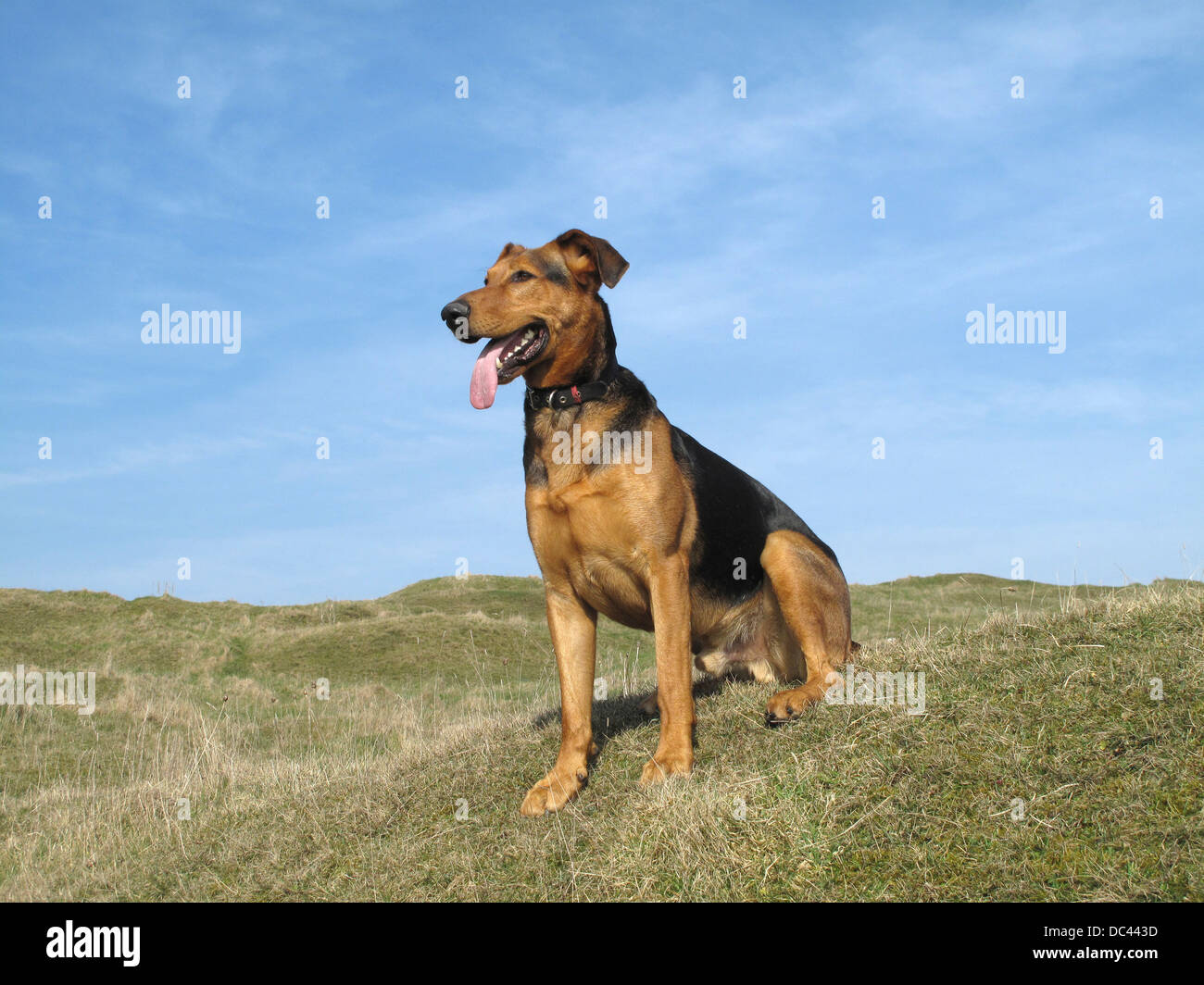 Sitting dog in The Peak District - Stock Image