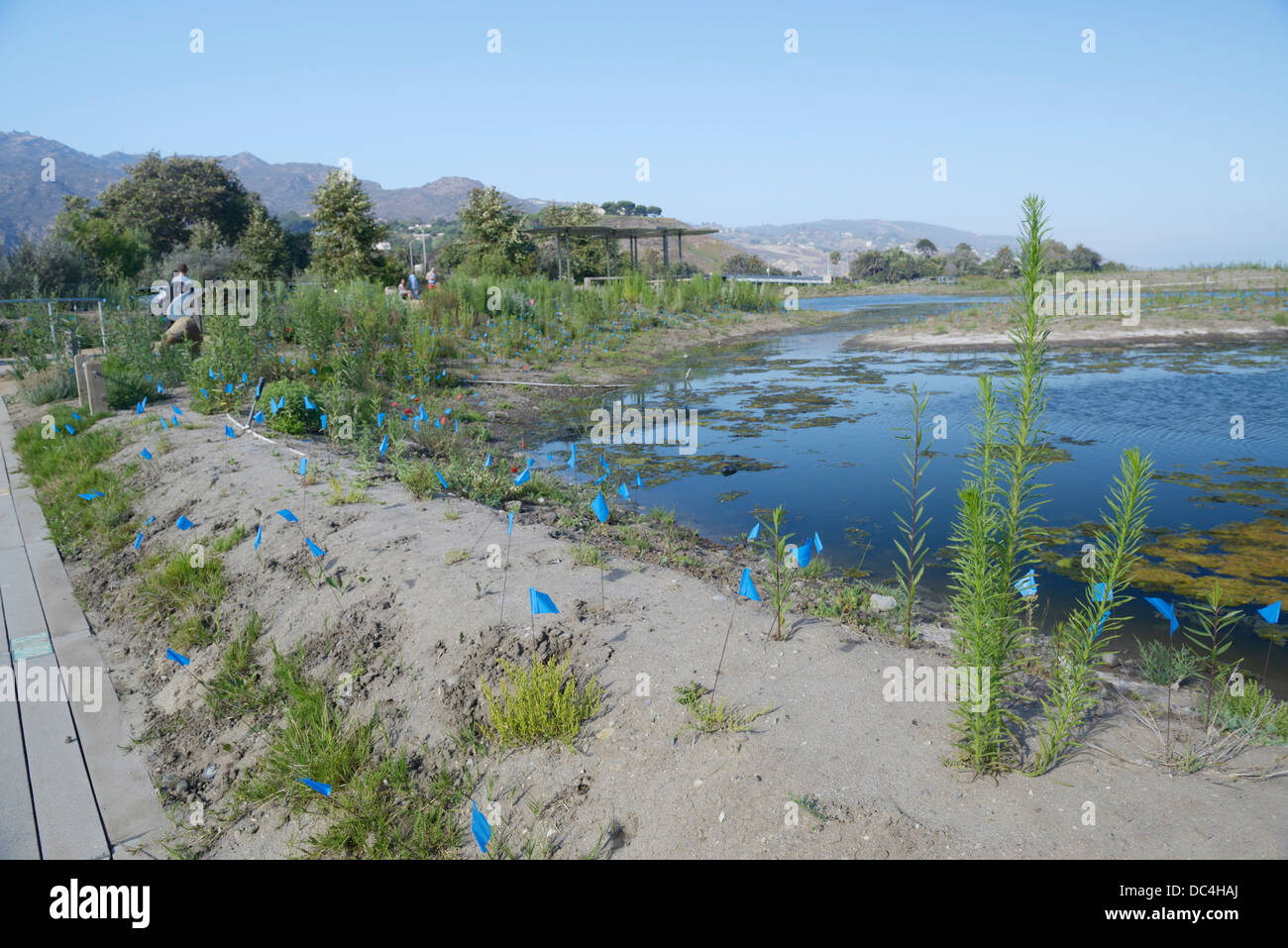 Malibu Lagoon restoration project.  A multi-agency group is working to improve the estuary's ecological health - Stock Image