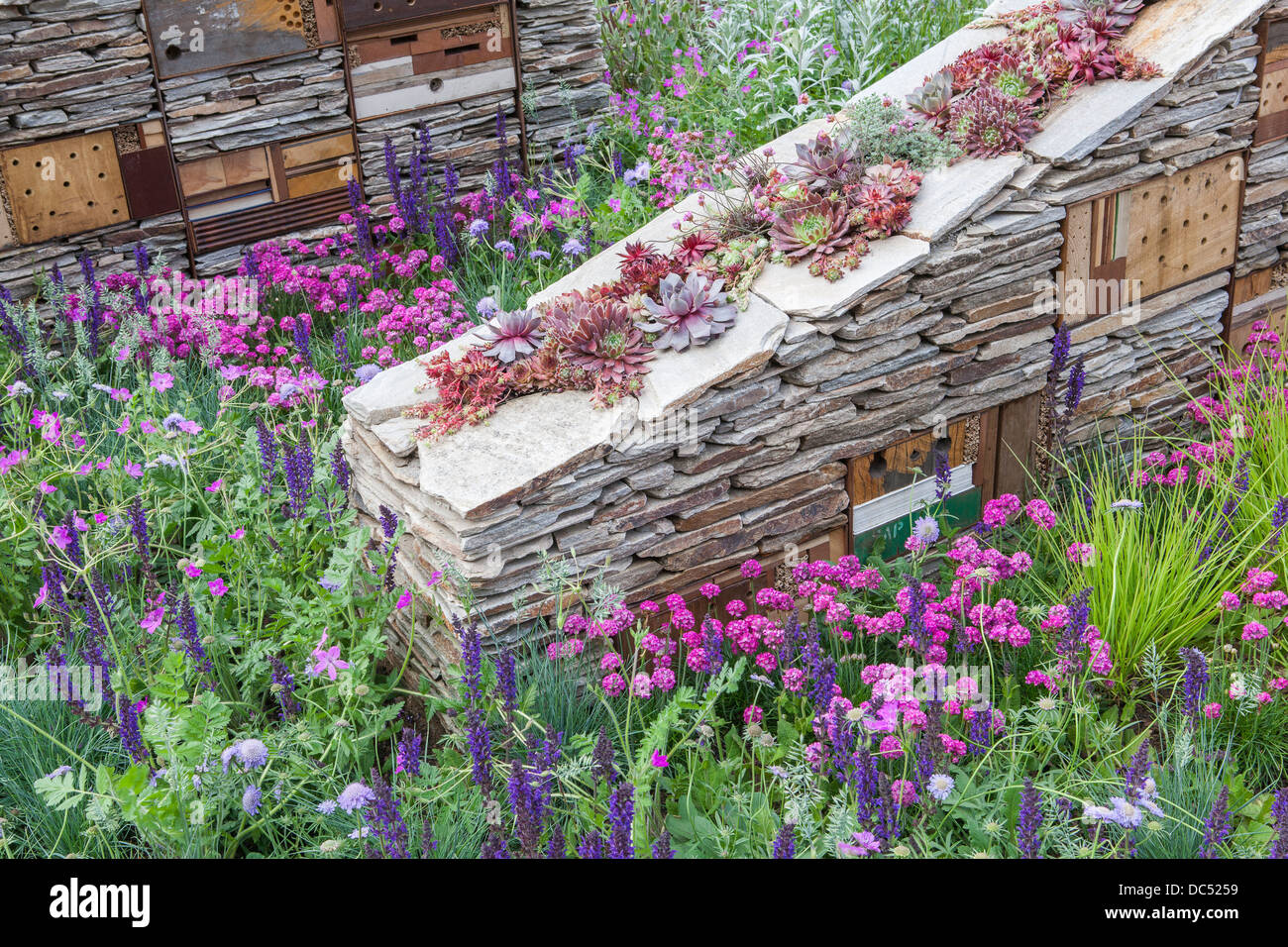 Dry stone wall with wildlife habitats and sempervivum inside - Stock Image