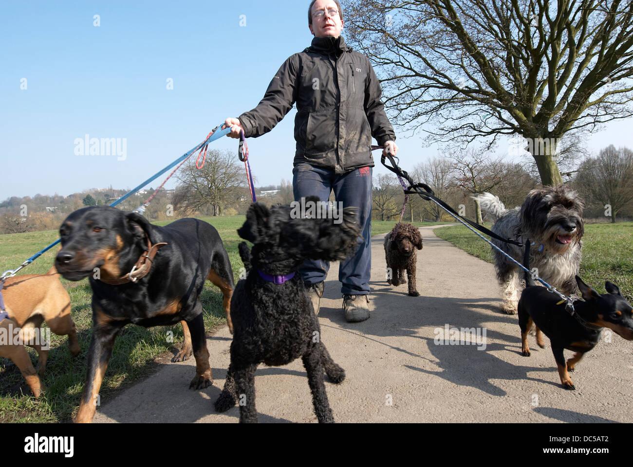 Dog walker on Hampstead Heath - Stock Image