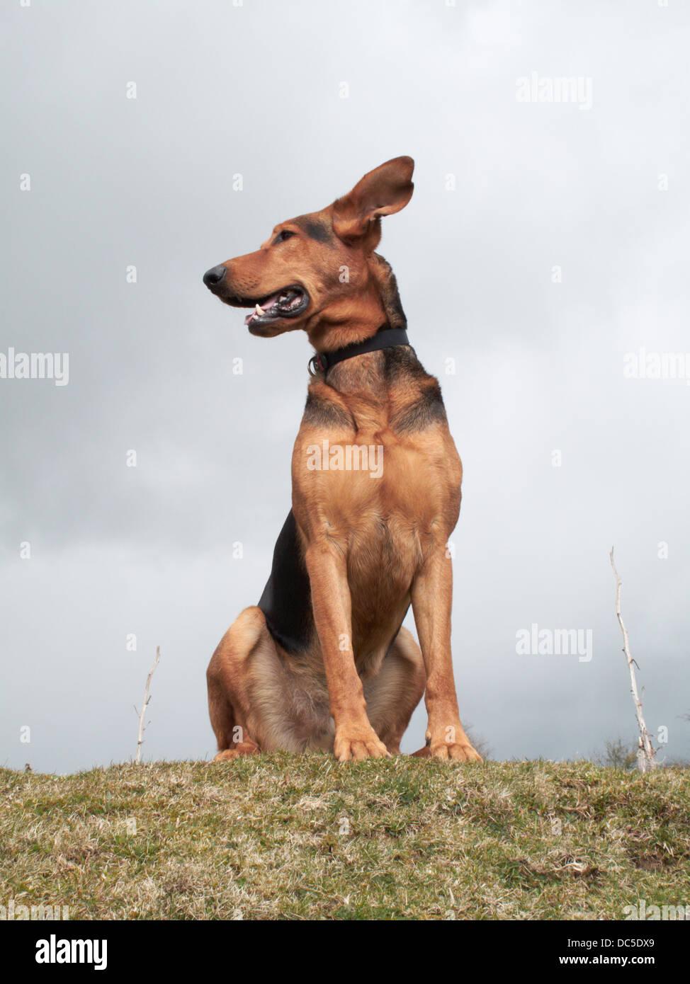sitting dog - Stock Image