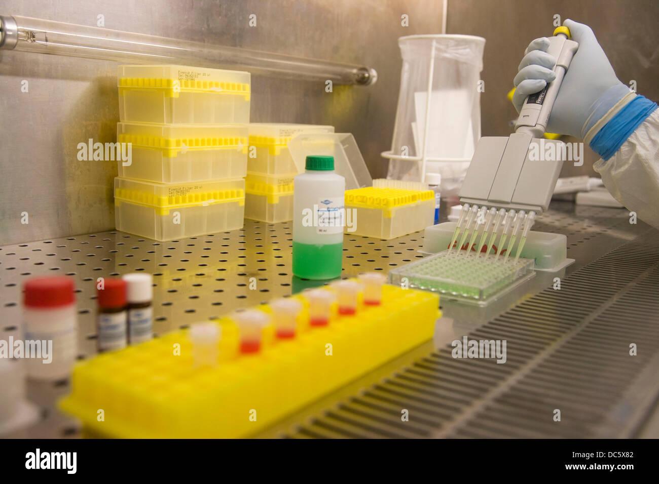 ELISA plate and finnpipette, Laboratory of Bacteriology, Departamento de Producción y Sanidad Animal, Neiker - Stock Image