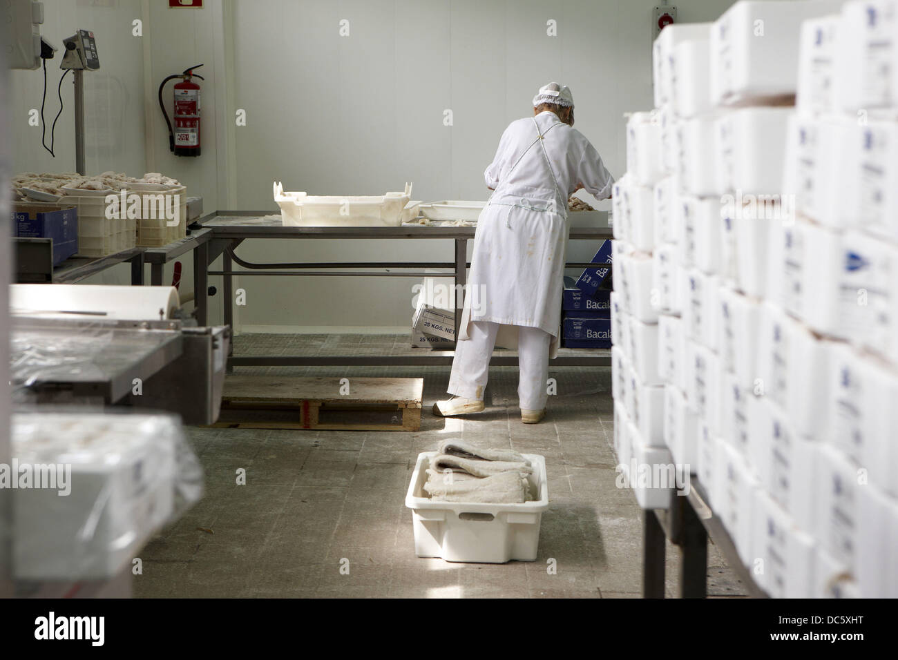 Manipulation of salt cod, refrigerated and frozen salt cod distribution - Stock Image