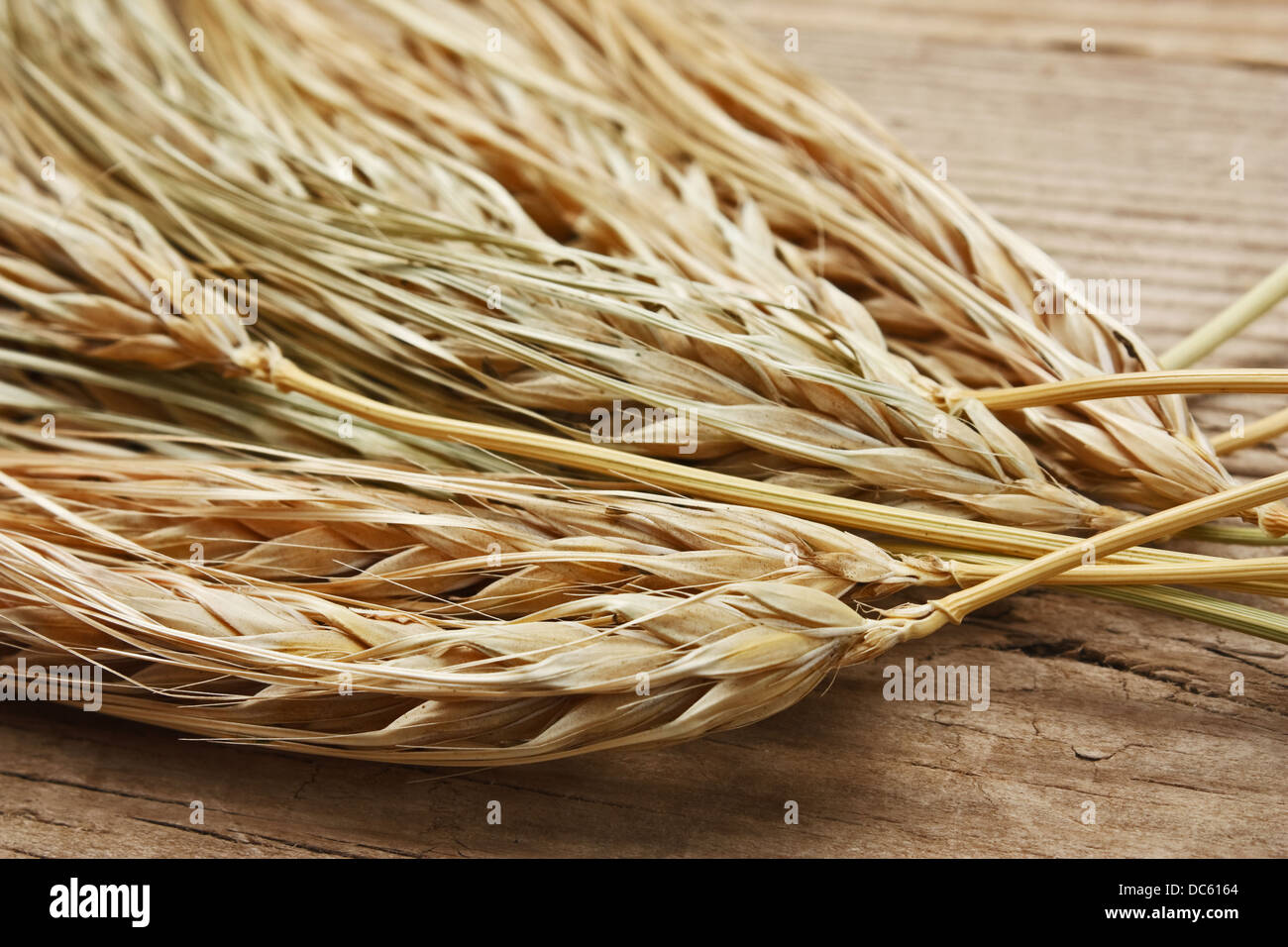 dry ears of corn on the wooden table - Stock Image