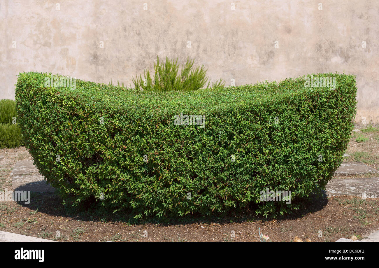 Boat shaped hedge on cemetery in Škrip on Brač island, Croatia - Stock Image