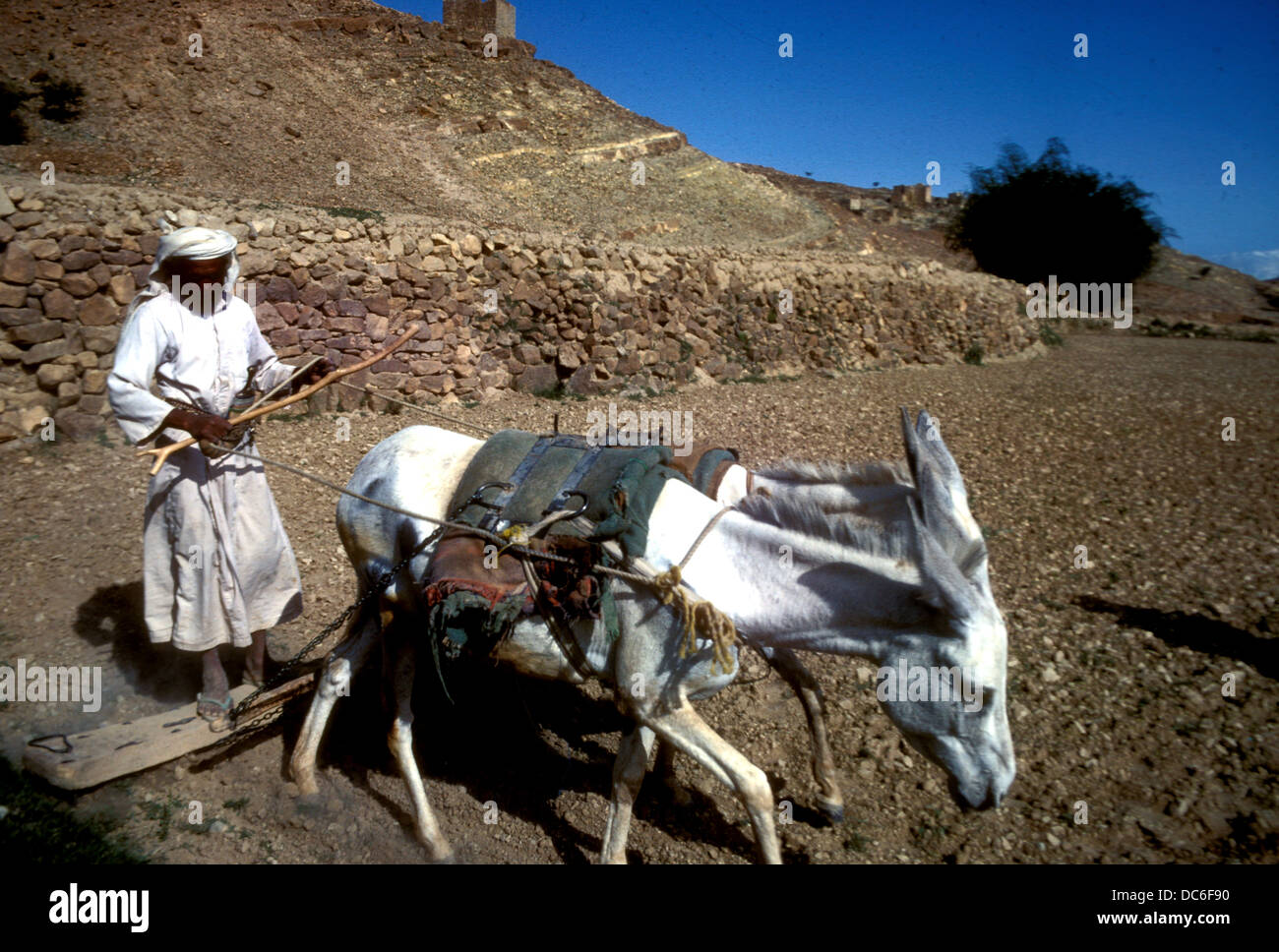 A farmer tilling the soil using a donkey-drawn wooden plough in the mountains of Yemen - Stock Image
