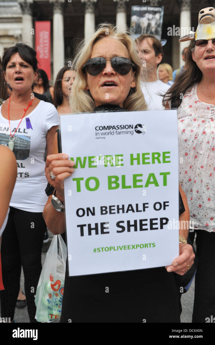Trafalgar Square, London, UK. 10th August 2013. Protesters against live animal exports stand on the steps in front - Stock Image