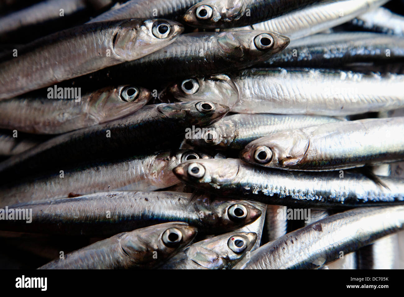 Fresh anchovies, Barcelona, Spain. - Stock Image