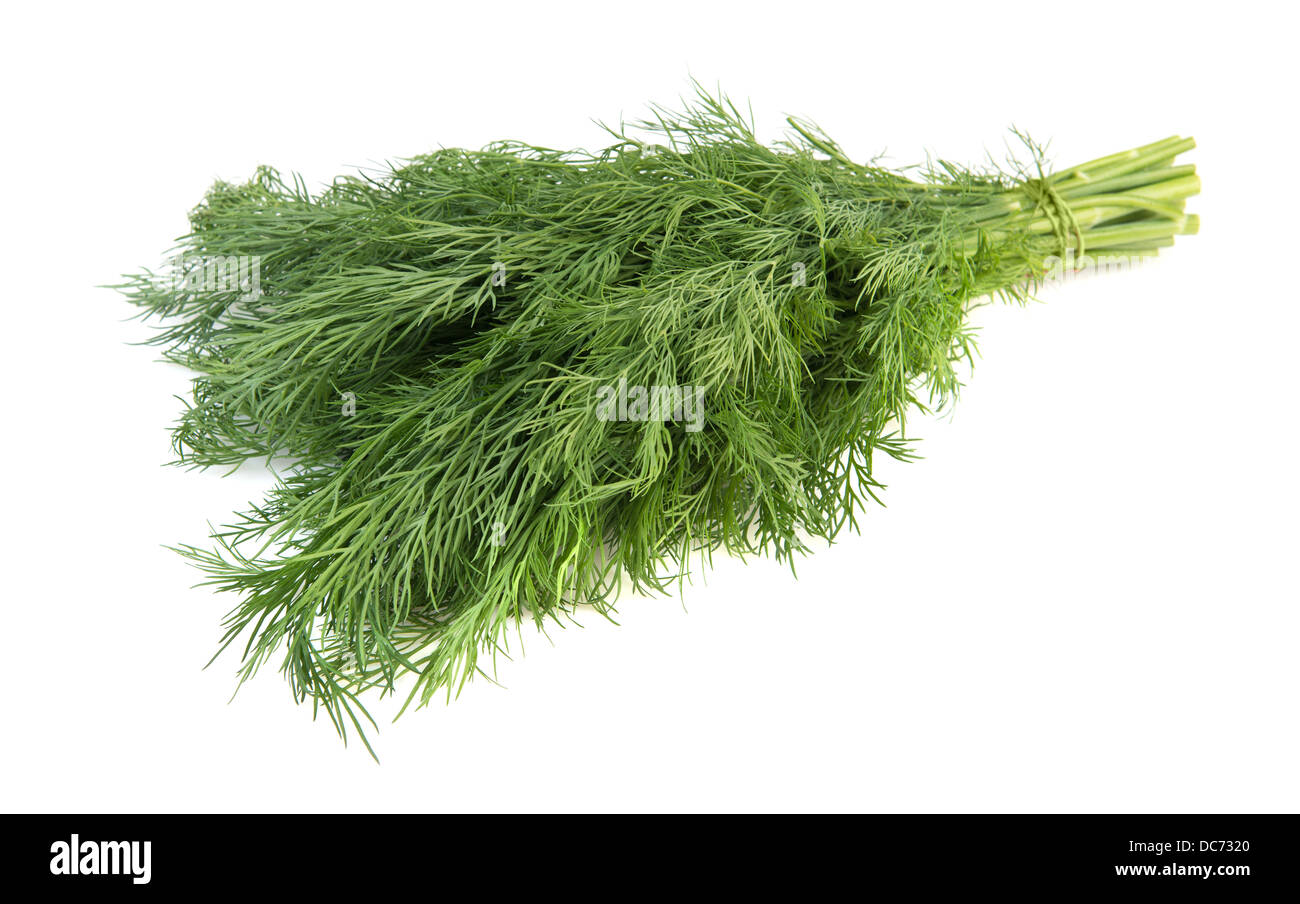 Fresh dill isolated over white - Stock Image