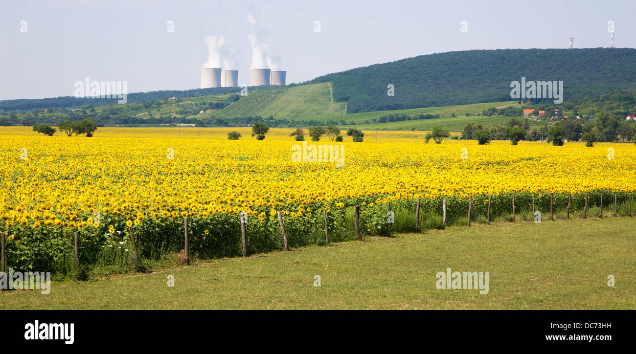 sun flowers and atomic power plant Mochovce - Slovakia. - Stock Image
