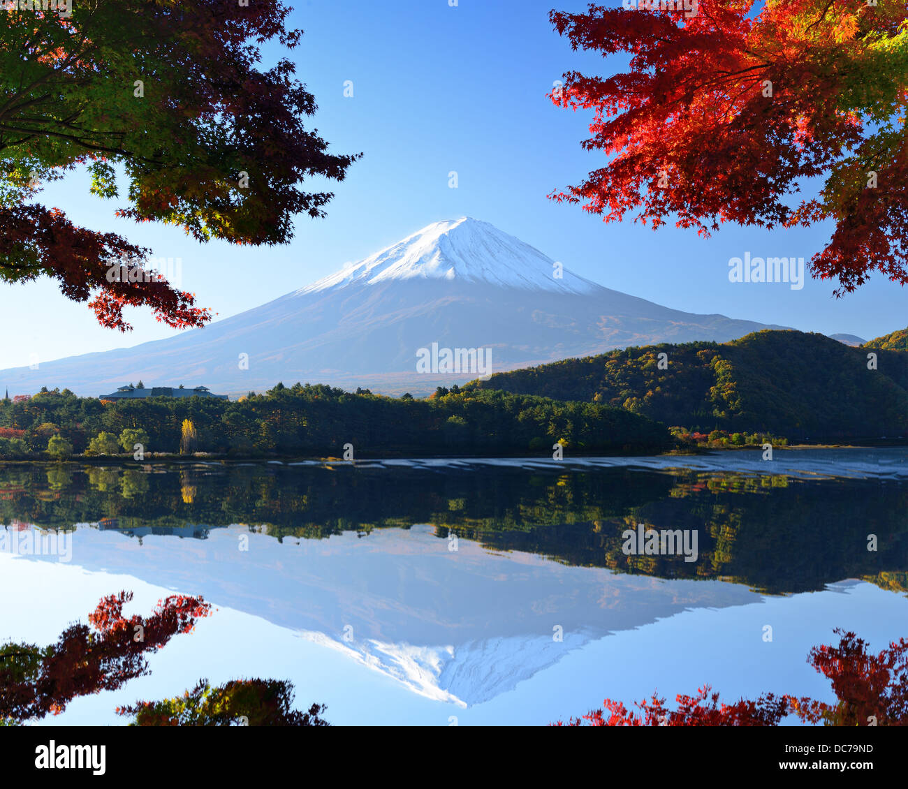 Mt. Fuji and autumn foliage at Lake Kawaguchi. - Stock Image