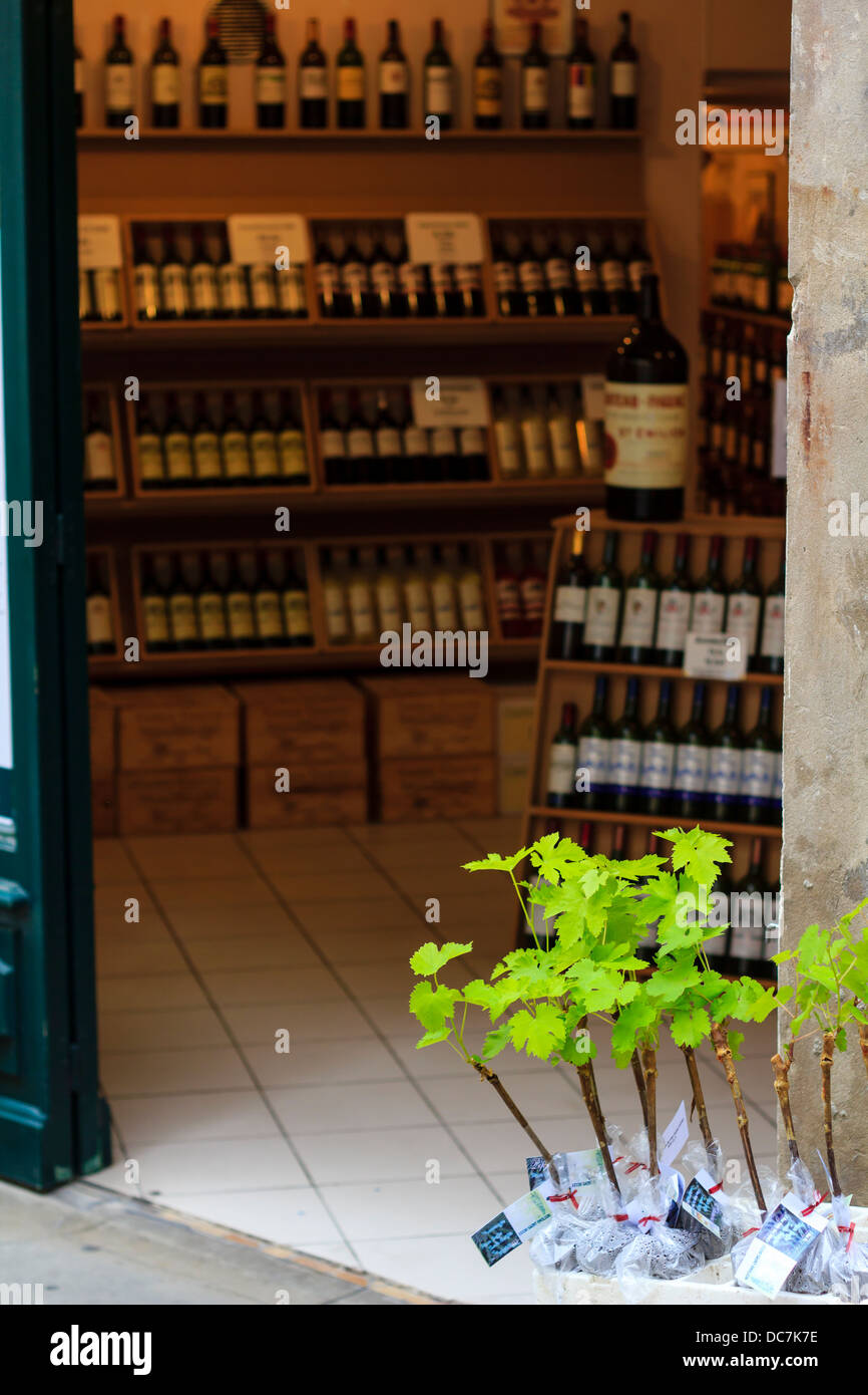Wine shop in St-Emilion village, France. Young vine offsprings for sale in the entrance to the shop - Stock Image
