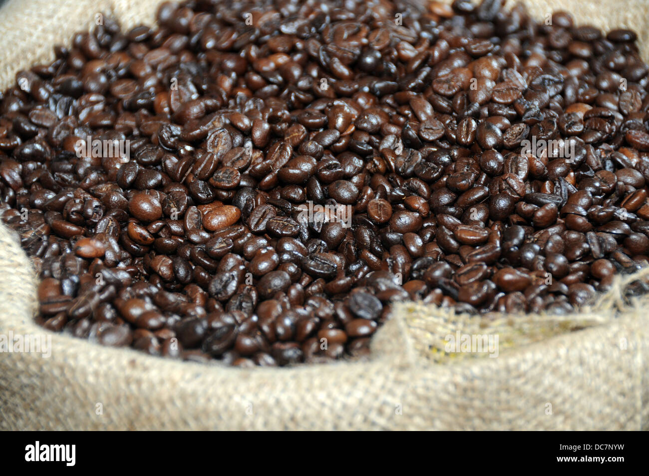 coffee grains in canvas bag - Stock Image