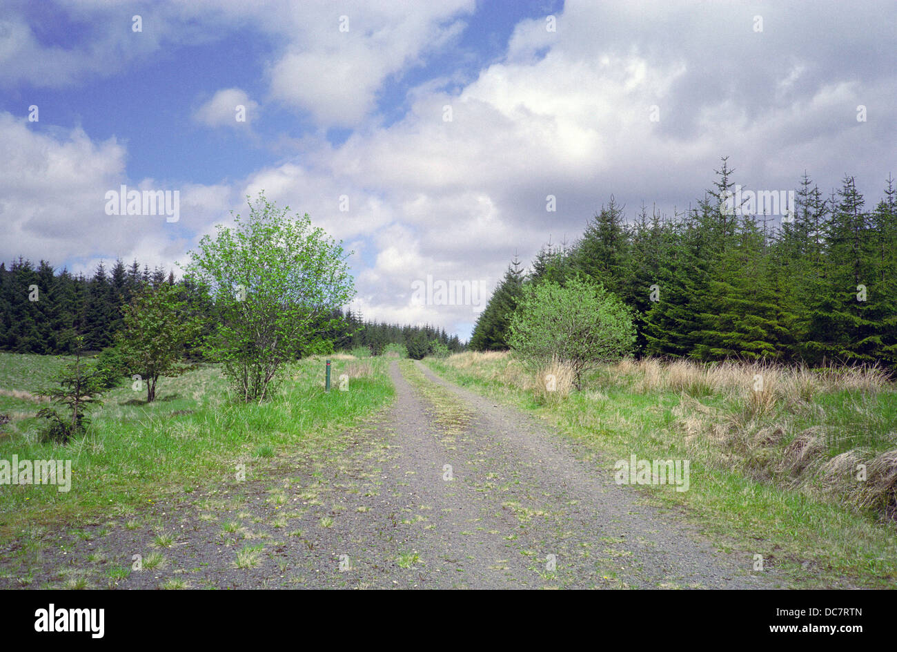 Craigieburn Forest with Unmade Road, Dumfries and Galloway, Scotland, UK - Stock Image