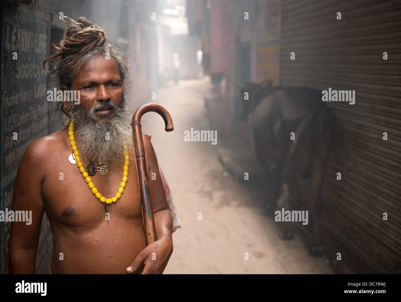 Sadhu, Holy Man and cow off Kachaudi Gali, Varanasi, Uttar Pradesh, India - Stock Image