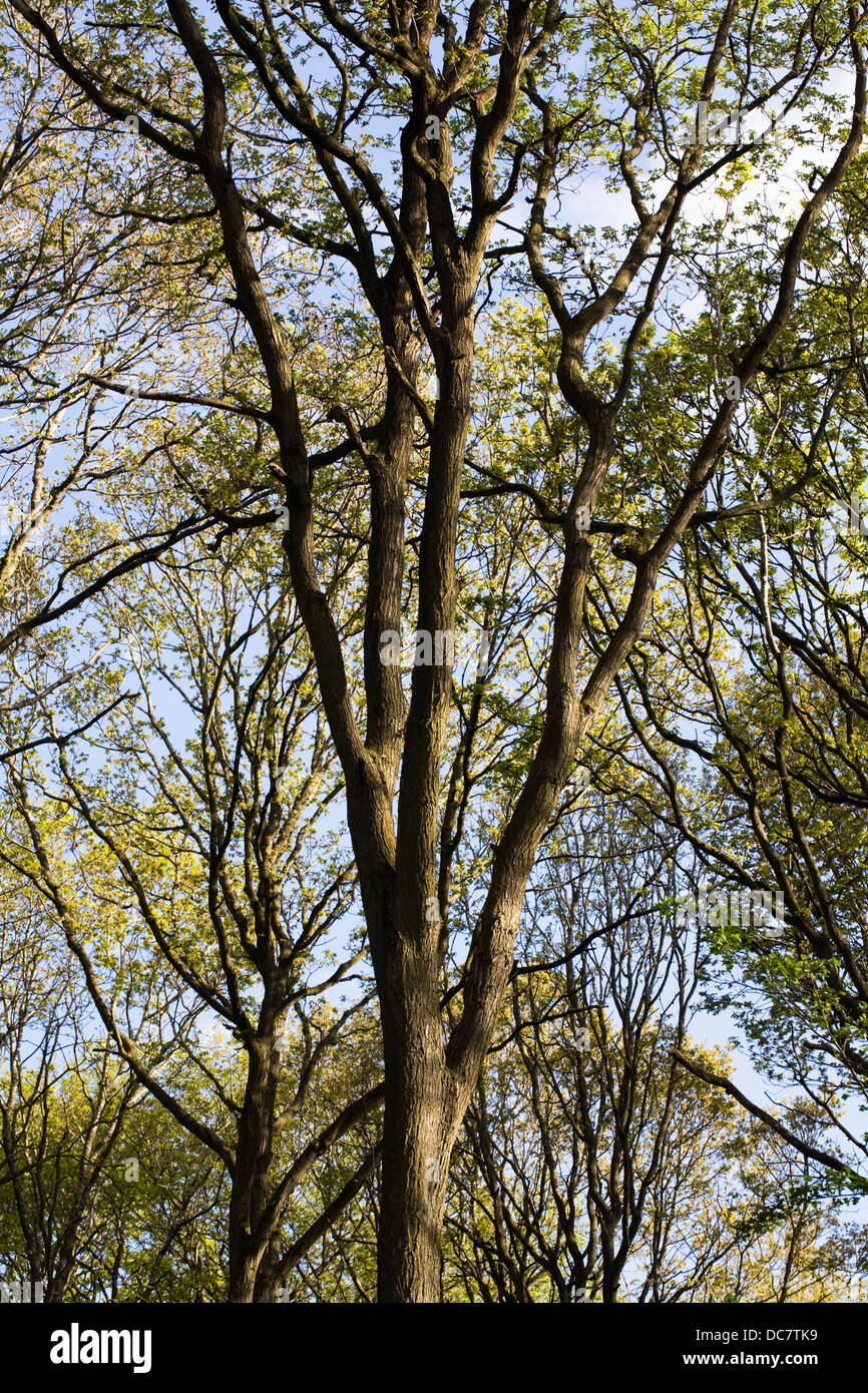 English wood in Spring. - Stock Image