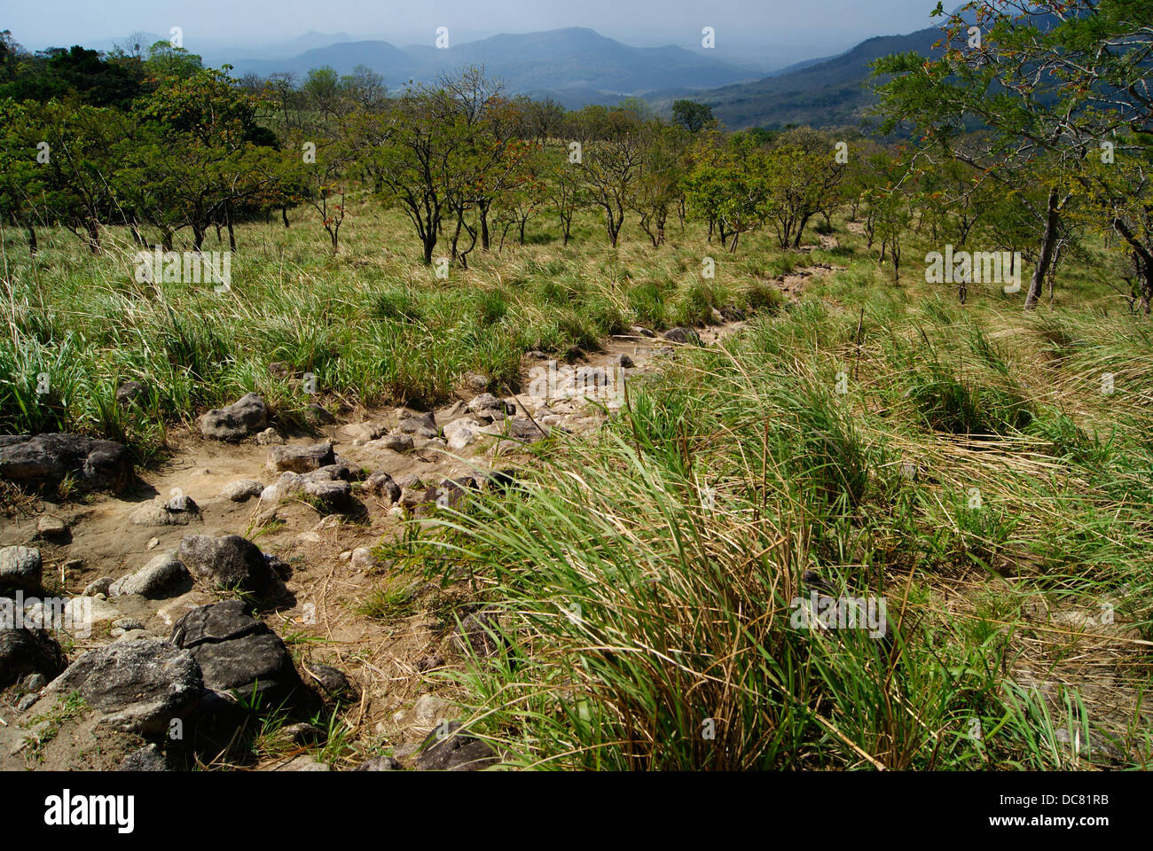 Western Ghats Forest Valleys and Jungle Trekking Paths at Agastyarkoodam hills , Kerala, India - Stock Image