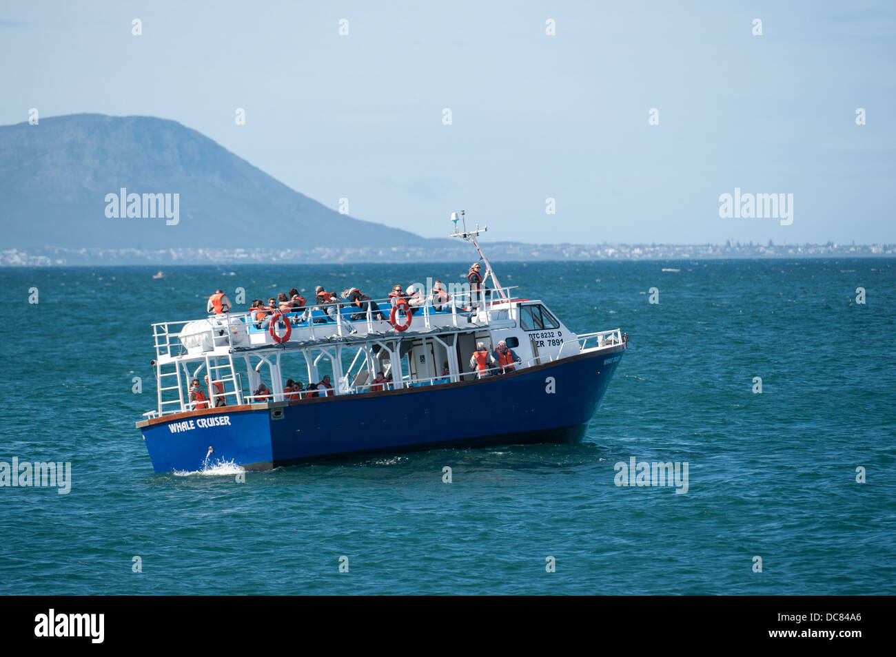 Whale watching boat next to a whale, Hermanus, Western Cape, South Africa - Stock Image