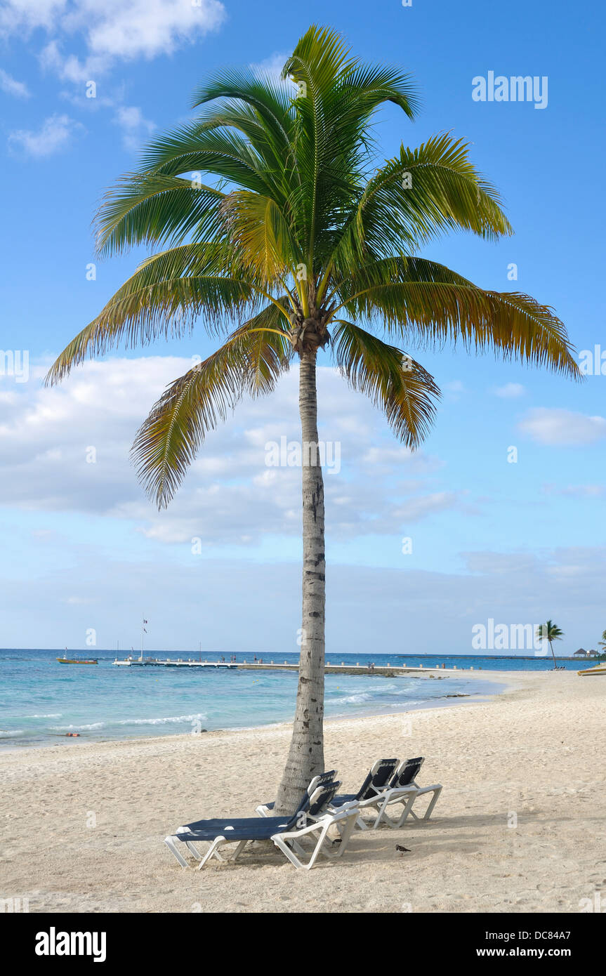 Beach in Mexico - Beach Chairs under Palm Tree on Quintana Roo Tropical Beach on the Yucatan Peninsula, Mexico - Stock Image
