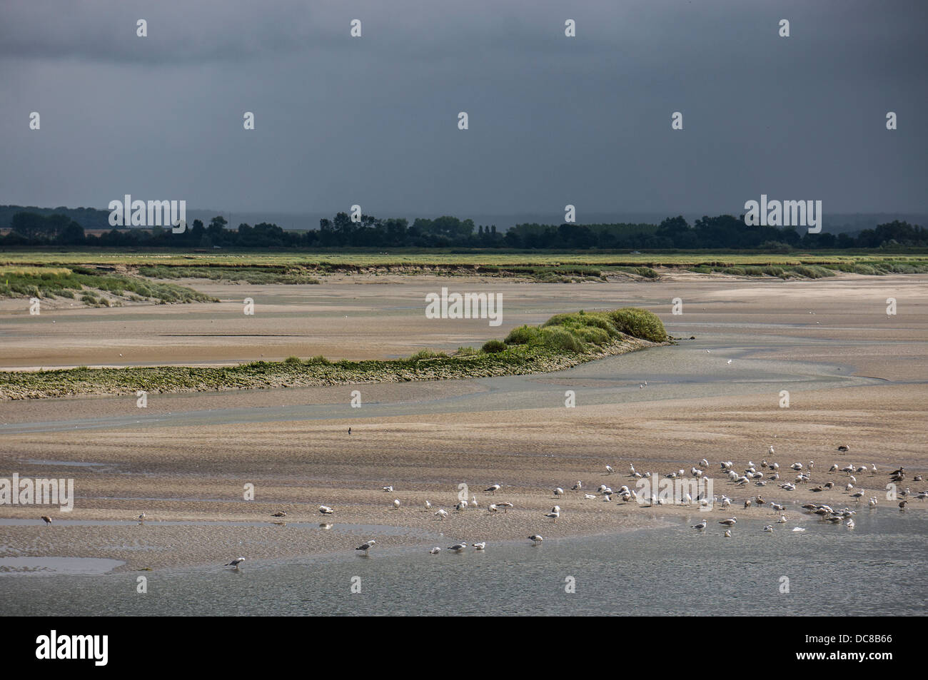 Seagulls on the beach at Saint-Valery-sur-Somme, a commune in the Somme department, northern France. - Stock Image