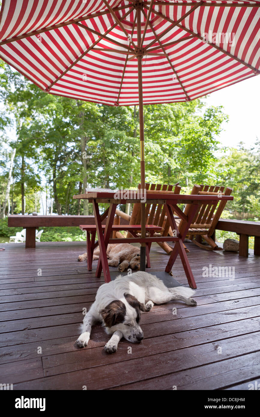 2 dogs relax while on vacation on Washington Island, Wisconsin. - Stock Image