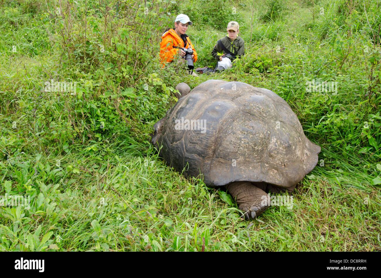 Ecuador, Galapagos, Santa Cruz highlands. Young photographers close to a Galapagos dome-shaped tortoise in grassy - Stock Image