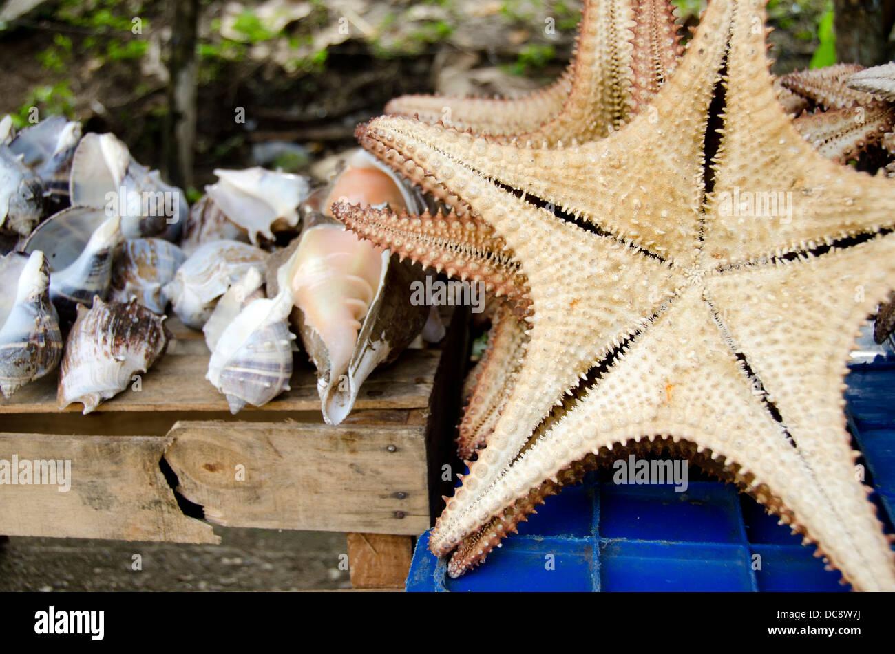 Guatemala, Livingston. Souvenir starfish (underside) and seashells for sale, typical vendor stand along the coast. - Stock Image