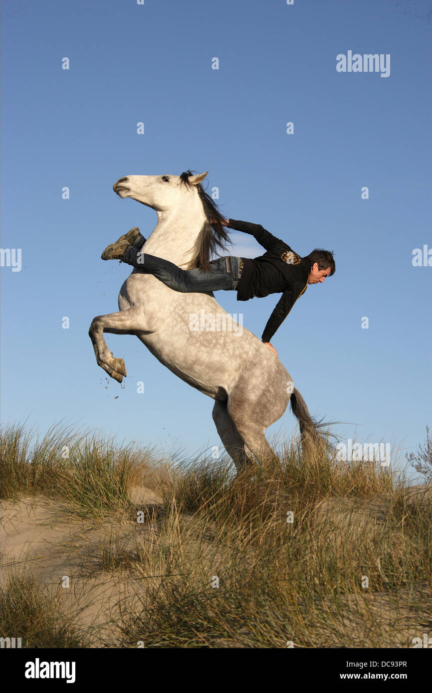 Jean Francois Pignon reverse rearing Iberian mare without saddle and tack - Stock Image