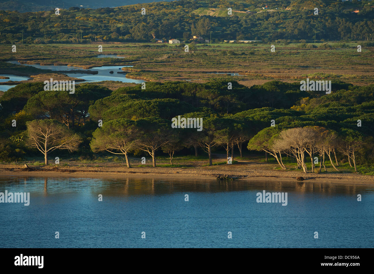 Approaching the prot of Olbia with the ferry boat. View of beach with trees - Stock Image
