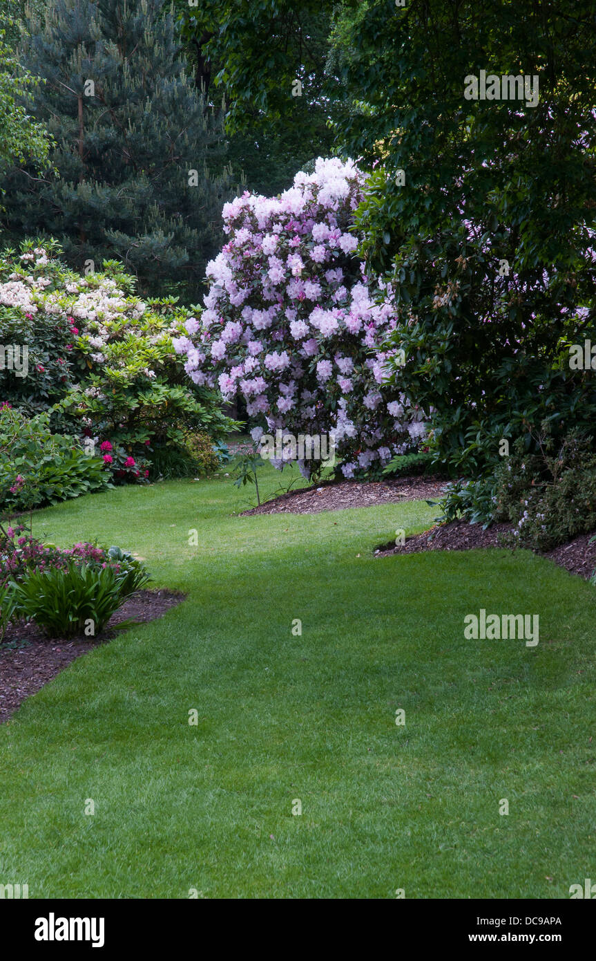 Spring borders with rhododendrons - Stock Image