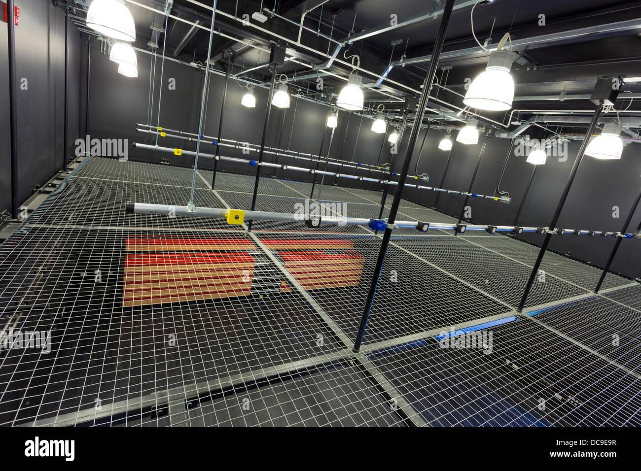 mesh mezzanine floor to access lighting rig in school theatre - Stock Image