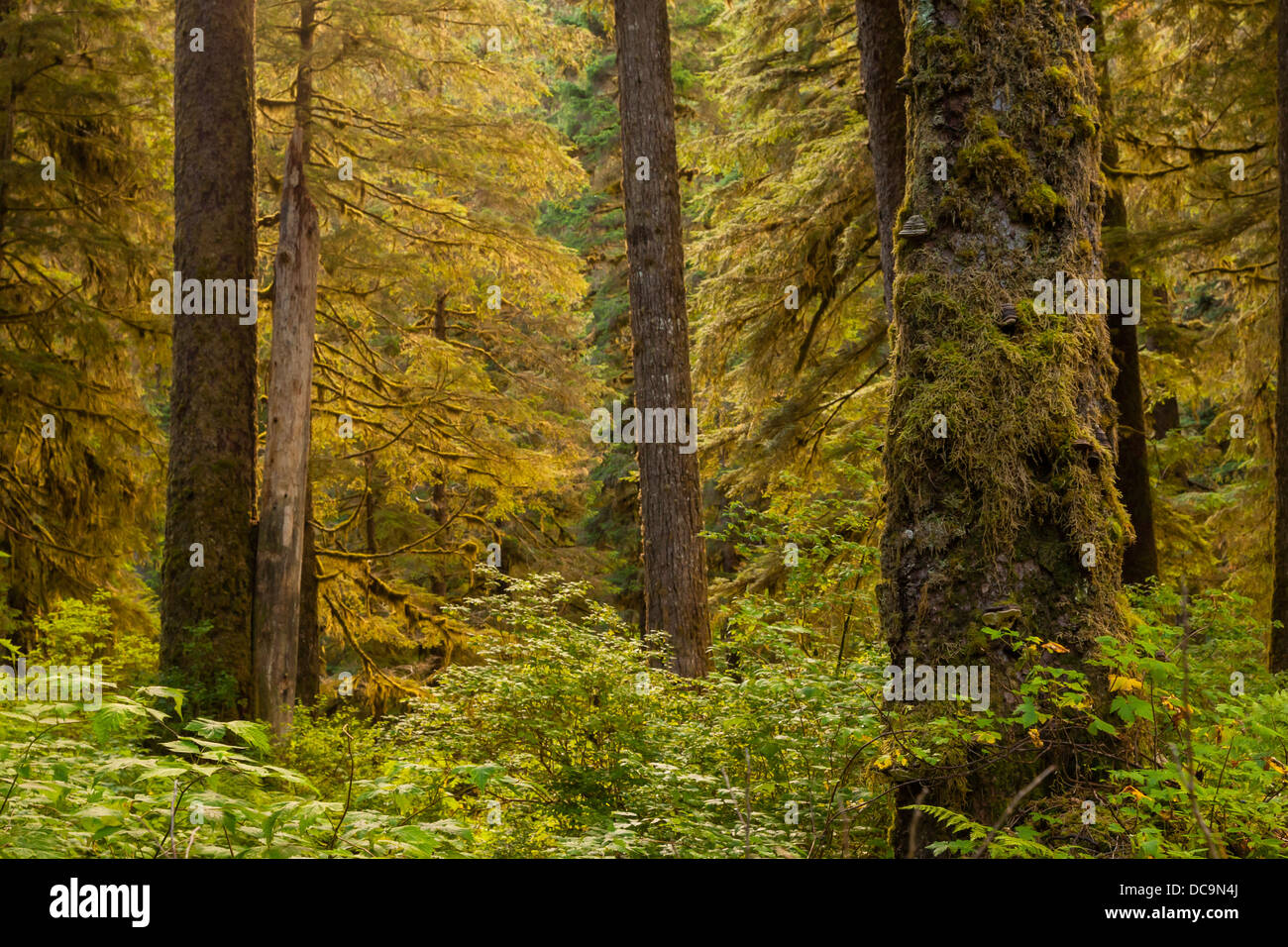 USA, Alaska, Tongass National Forest. Forest scenic on Admiralty Island. - Stock Image