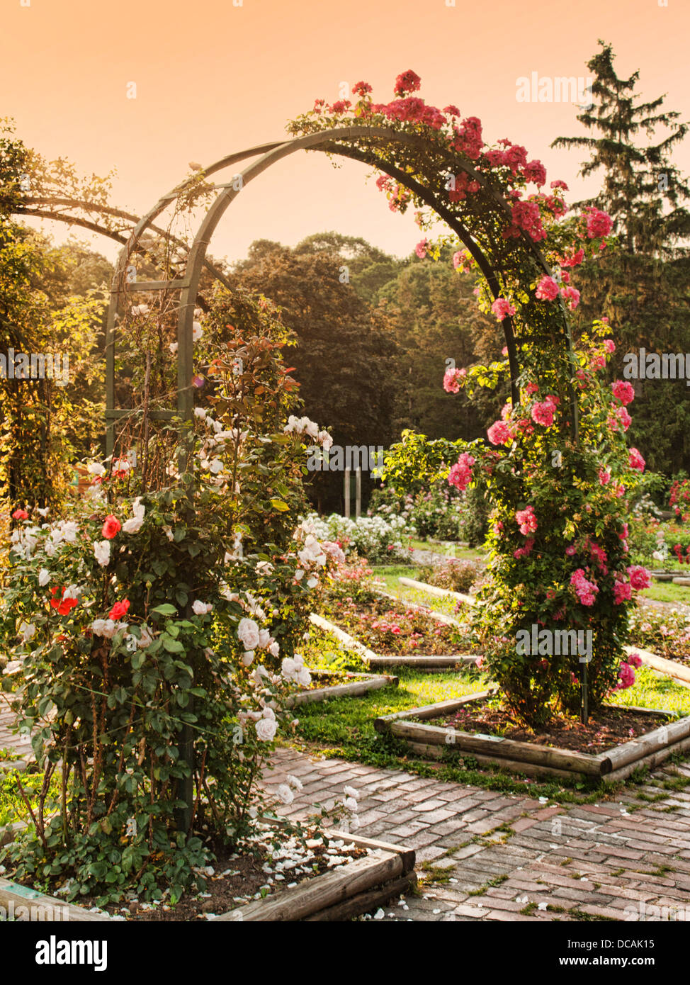 Attrayant Rose Garden With Trellis In The Morning   Stock Image
